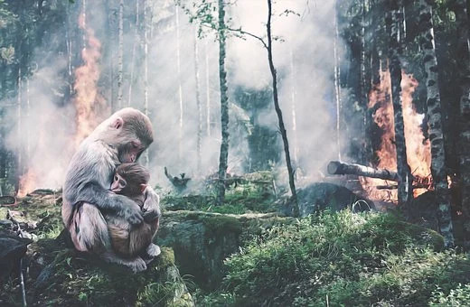 picture of mother monkey cuddling baby whilst forest around them burns.